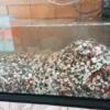 金魚の砂利を増やし過ぎたらこうなります